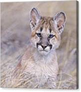 Mountain Lion Cub In Dry Grass Canvas Print