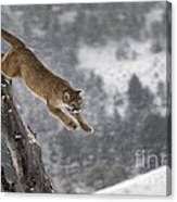 Mountain Lion - Silent Escape Canvas Print