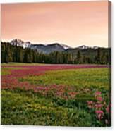 Mountain Meadow Color Canvas Print