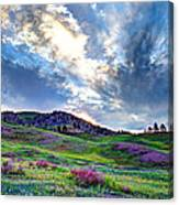 Mountain Meadow Of Flowers Canvas Print