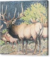Mountain Monarch Canvas Print