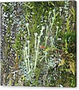 Mountain Moss Lichens And Fungi Canvas Print