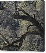 Mountain Oak Canvas Print