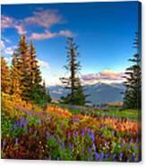Mountain Rainier  Sunset Canvas Print