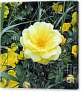 Mountain Rose Canvas Print