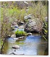 Mountain Stream In Castlewood Canyon State Park Canvas Print