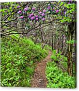 Mountain Trail With Catawba Rhododendron Canvas Print