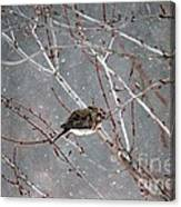 Mourning Dove Asleep In Snowfall Canvas Print