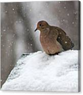 Mourning Dove In Snow Canvas Print
