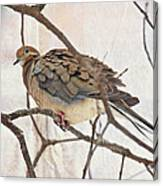Mourning Dove - Sing No Sad Song For Me #2 Canvas Print