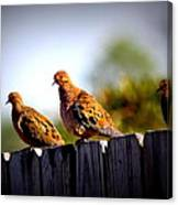 Mourning Doves On Fence Canvas Print