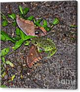 Mouthful Of Moth Canvas Print