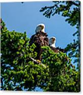 Mr. And Mrs Eagle Canvas Print