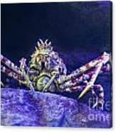 Mr Crab Canvas Print