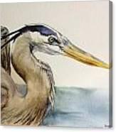 Mr herrin Canvas Print