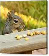 Mr. Squirrel Goes To Lunch Canvas Print