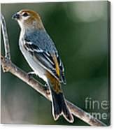 Mrs. Pine Grosbeak Canvas Print