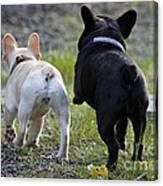Ms. Quiggly And Buddy French Bulldogs Canvas Print