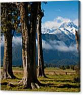 Mt Cook Through Trees Canvas Print