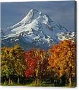 1m5117-mt. Hood In Autumn Canvas Print