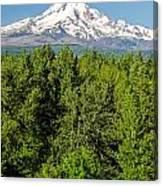 Mt. Hood Vertical Canvas Print