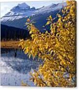1m3626-mt. Saskatchewan In Fall Canvas Print