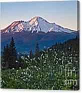 Mt. Shasta At Dawn Canvas Print