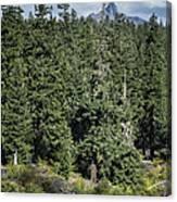 Mt Washington Behind Clear Lake Canvas Print