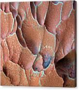 Muav Mosaic Canvas Print