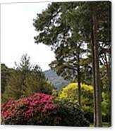 Muckross Garden In Spring Canvas Print