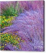 Muhly Grass In The Morning Canvas Print