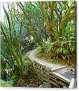 Curve In The Dipsea Canvas Print