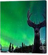 Mule Deer And Aurora Borealis Over Taiga Forest Canvas Print