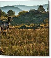 Mule Deer At De Weese Reservoir Canvas Print