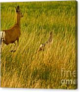 Mule Deer Doe And Fawn-signed-#0365 Canvas Print