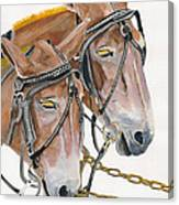 Mules - Two - Beast Of Burden Canvas Print