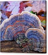 Multicolor Mushroom Canvas Print