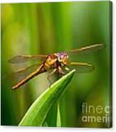 Multicolored Dragonfly Canvas Print