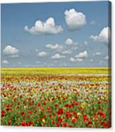 Multicoloured Field Canvas Print