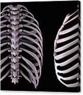 Multiple View Of The Rib Cage Canvas Print