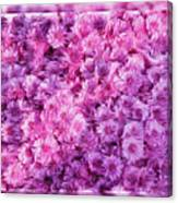 Mums In Purple - Featured In 'comfortable Art' And 'nature Photography' Groups Canvas Print