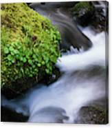 Munson Creek Flows Through The Forest Canvas Print