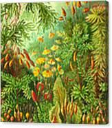 Muscinae Canvas Print