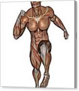 Muscular Man Running Canvas Print