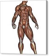 Muscular Man Standing Canvas Print