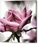 Museum Park Pink Rose Canvas Print