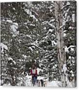 Musher In The Forest Canvas Print