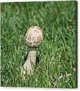 Mushroom 01 Canvas Print