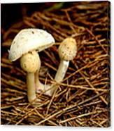 Mushroom 3 Canvas Print