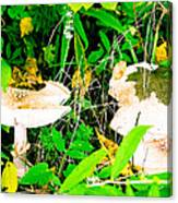 Mushroom Abstract # 3 Canvas Print